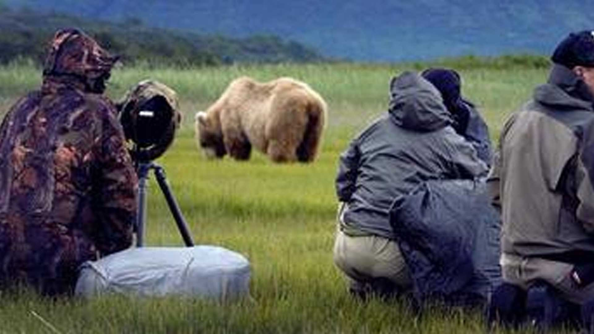 Bear Viewing Packages