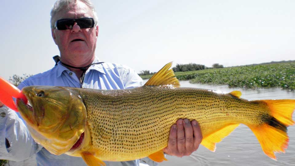 Spin angling for golden dorado
