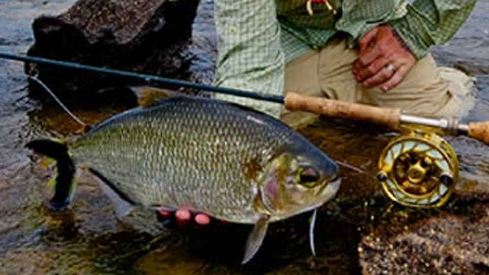 Brazil fly fishing