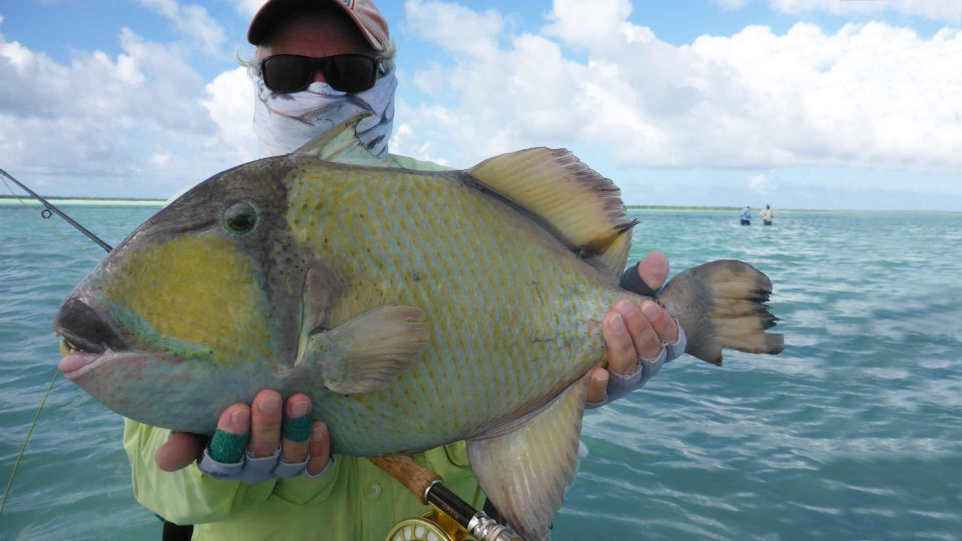 Triggerfish at Christmas Island