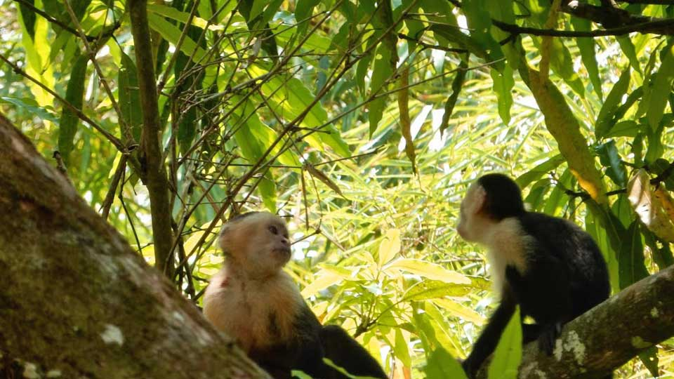 Rio Parismina Lodge monkeys