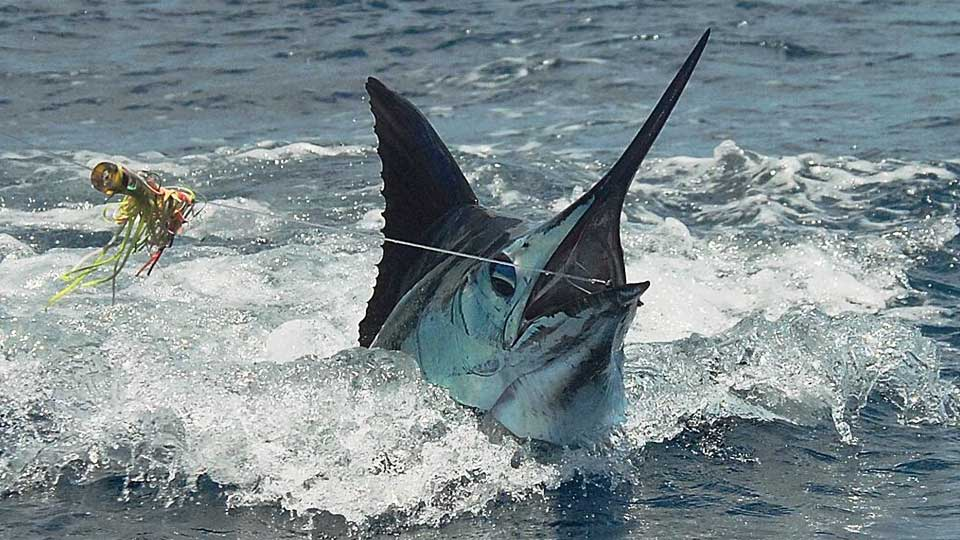 Zancudo Marlin Fishing