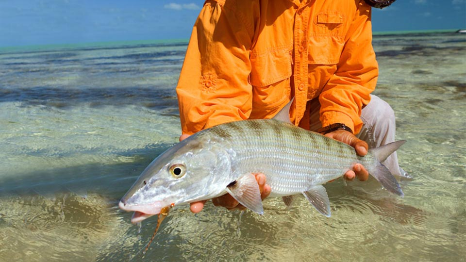Cayo Cruz bonefishing