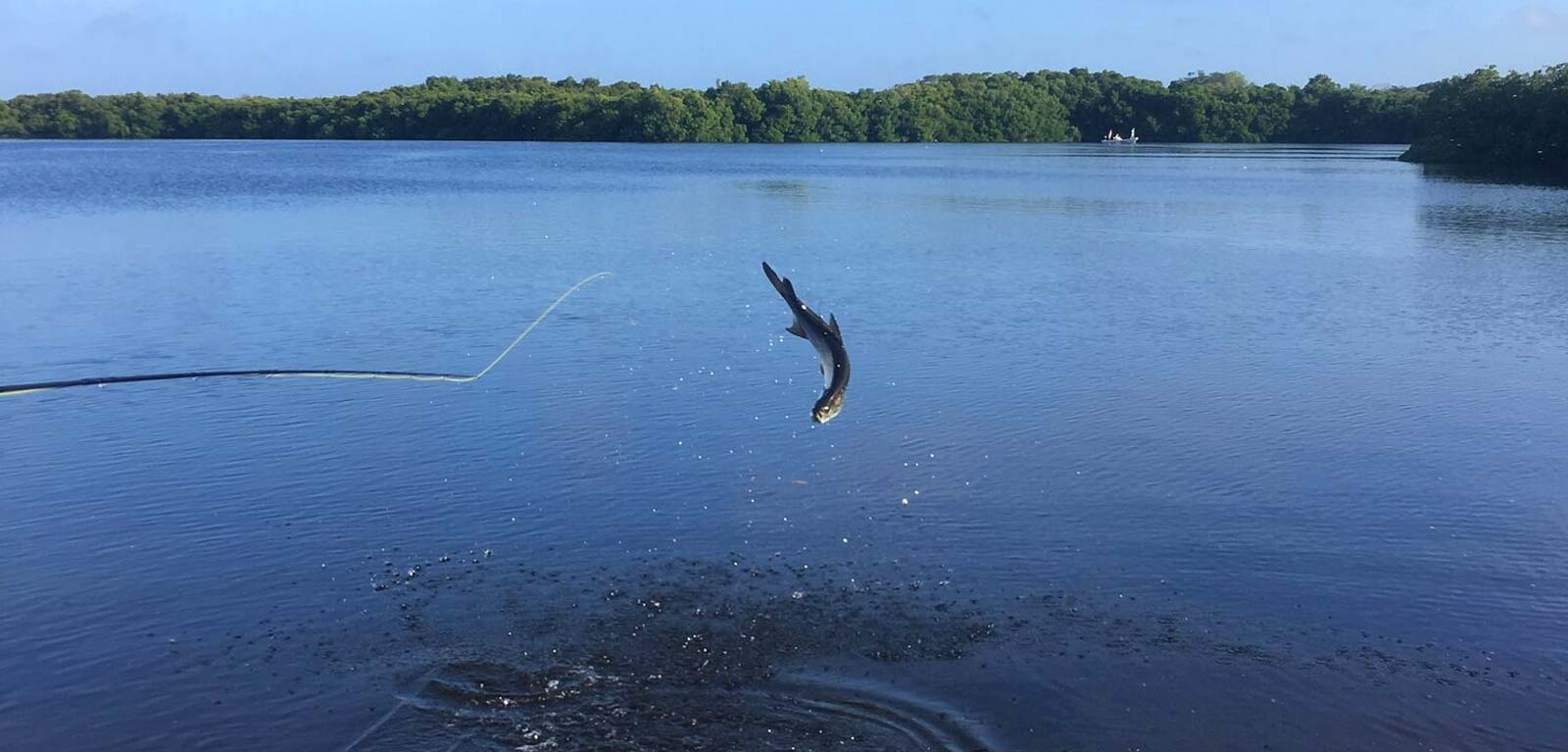 Campeche Hosted Tarpon Fishing Weeks