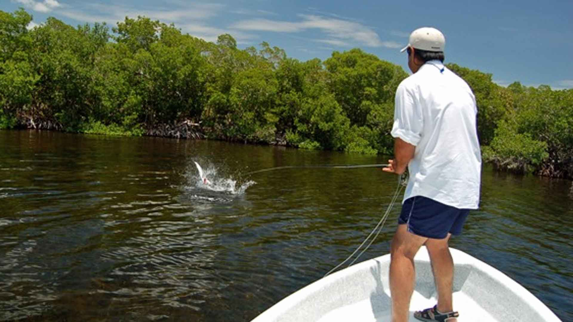baby tarpon action