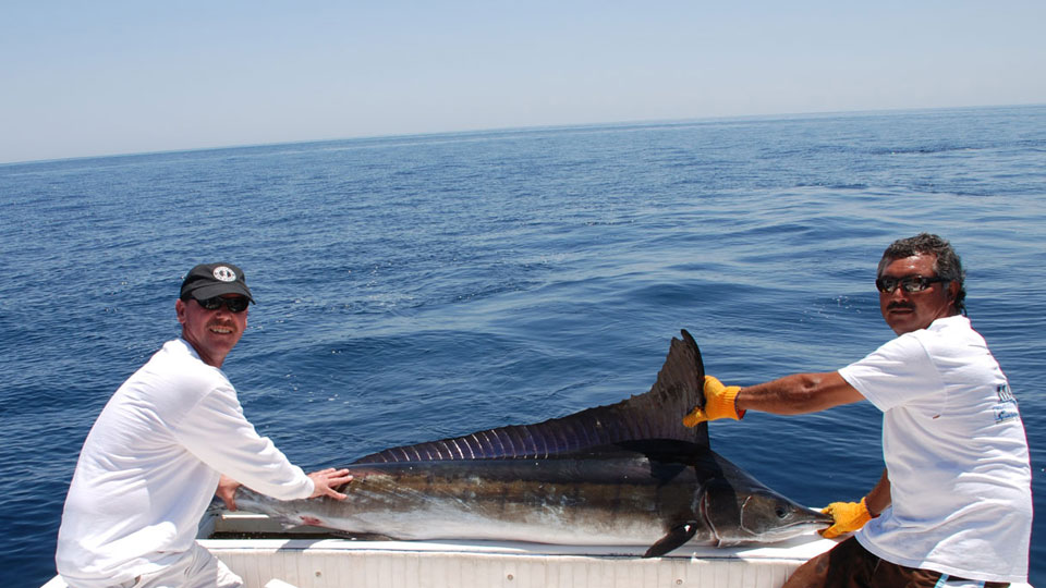 Baja Sailfish
